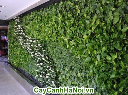 cây trầu bà làm vườn tường cây xanh